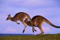 Австралия и Новая Зеландия