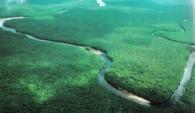 Дельта реки Ориноко